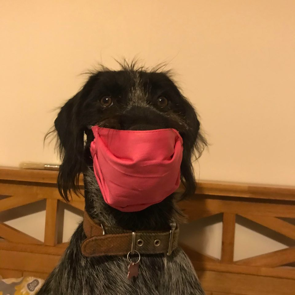 Dog wearing Colourful facemask, washable, reusable, handmade face covering with filter