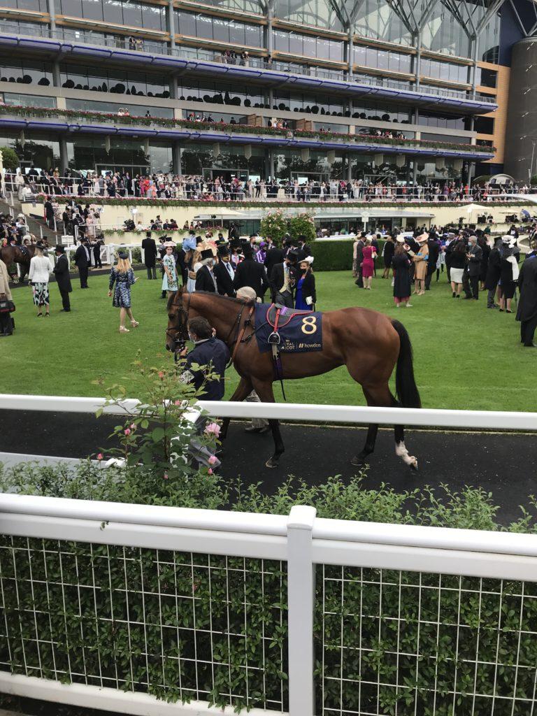 queens horse